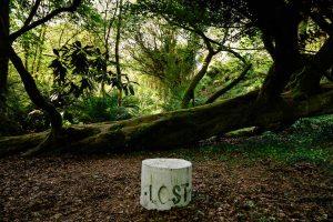 Tremenheere Sculpture Gardens in Penzance, Cornwall