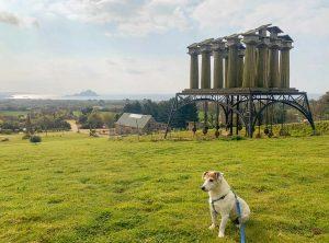 Dog Friendly - Tremenheere Sculpture Gardens