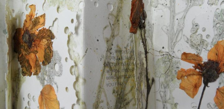The Little Book Project - Exhibitions in Cornwall
