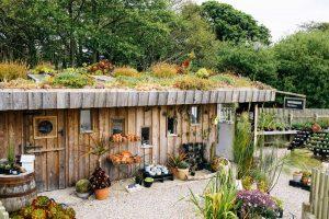 Tremenheere Sculpture Gardens, Penzance Cornwall.