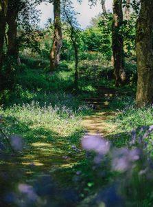 Tremenheere Sculpture Gardens - Group Bookings Cornwall